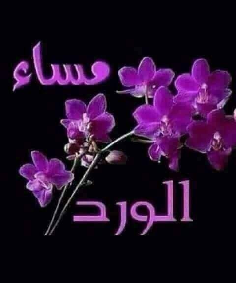 بعض القلوب شواطئ تجد فيها الراحة من هموم الحياة فقد ينعم الله عليك بأحباب تفيض قلوبهم إحتراما وتقديرا Purple Flowers Flowers Plants