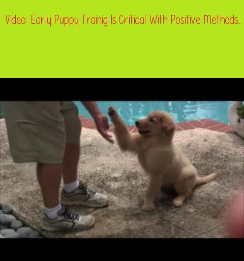 Early Puppy Trainig Is Critical With Positive Methods If
