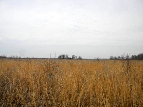 APPROX. 38 ACRES OF VACANT LAND, 9.10 ACRES ARE WOODS AND THE LOT FOR THE OLD HOME THAT HAS NO VALUE AT ALL, THE OTHER 28.90 ACRES ARE CROP LAND in Marmaduke AR