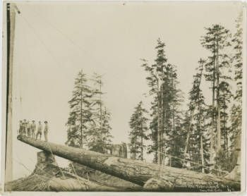 Hauling 200-foot log out of Alger Creek :: Wahkiakum County Heritage
