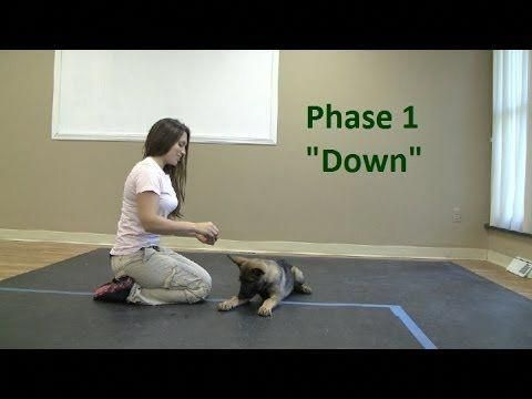 10 Pro Tips For Dog Training By Experts Dog Training Obedience Dog Training House Training Dogs