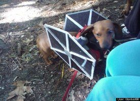 Dog That Sounds Like Tie Fighter