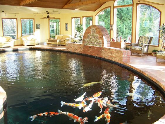 Inspirations modern indoor fish pond design to decoration for Outdoor goldfish for sale
