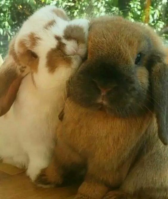 . . . that one is eating the other one's face loooool makes me wanna get another bunny to keep my Lola company <3