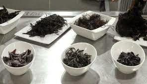 Algas marinas, un alimento mágico | Sentirse bien es facilisimo.com