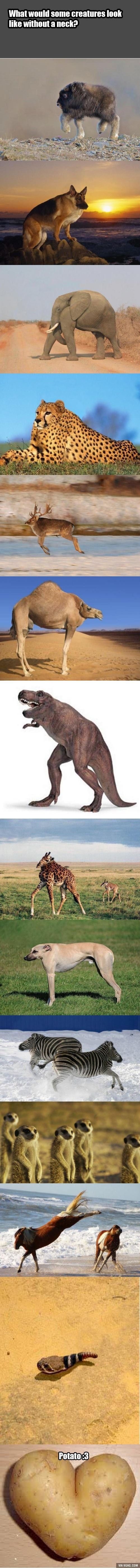 What would some creatures look like without a neck?