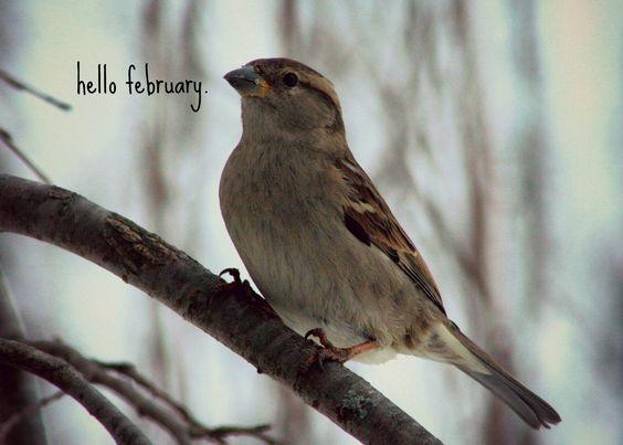 !¡ hello-february-sparrow: