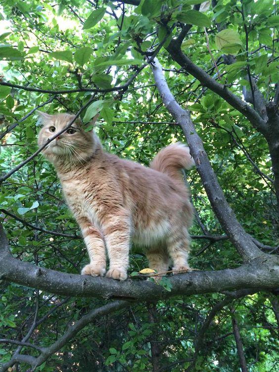 Lost Cat - Unknown - Markham, ON, Canada L3R 7L6