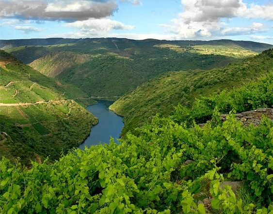 El vino genera en Galicia más de 153 millones de euros en 2012 http://www.vinetur.com/2013052212410/el-vino-genera-en-galicia-mas-de-153-millones-de-euros-en-2012.html