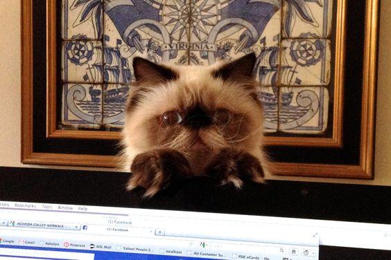 Popup Cat: Daisy