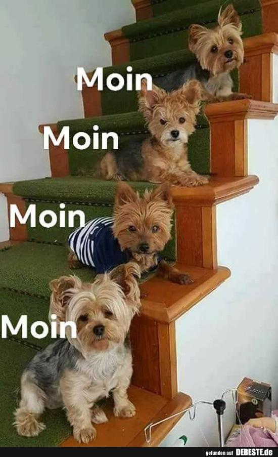 Besten Bilder Videos Und Spruche Und Es Kommen Taglich Neue Lustige Facebook Bilder Auf Debeste De Hier Werden Ta Yorkie Welpen Yorkshire Terrier Hund Yorkie