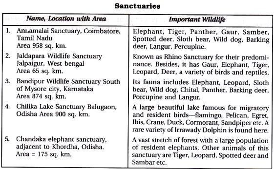 the best wildlife conservation in ideas  essay on animals for kids better opinion