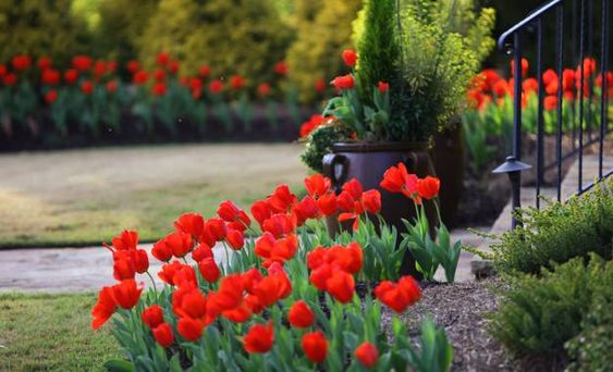 Spring flowers and yard landscaping ideas 20 tulip bed - Spring bulb garden design ...