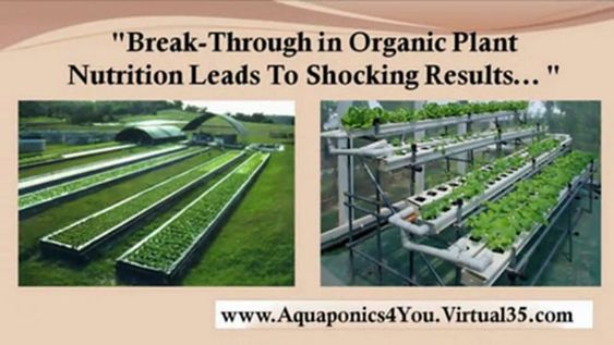 homemade hydroponic systems - aquaponics how to - home hydroponics | PopScreen