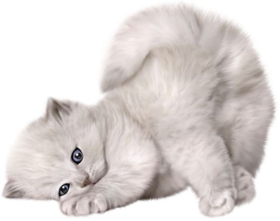 Large PNG Cute Cat Picture: