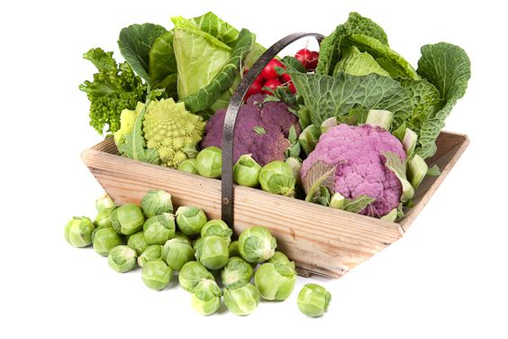 When To Plant Broccoli Cauliflower Brussel Sprouts