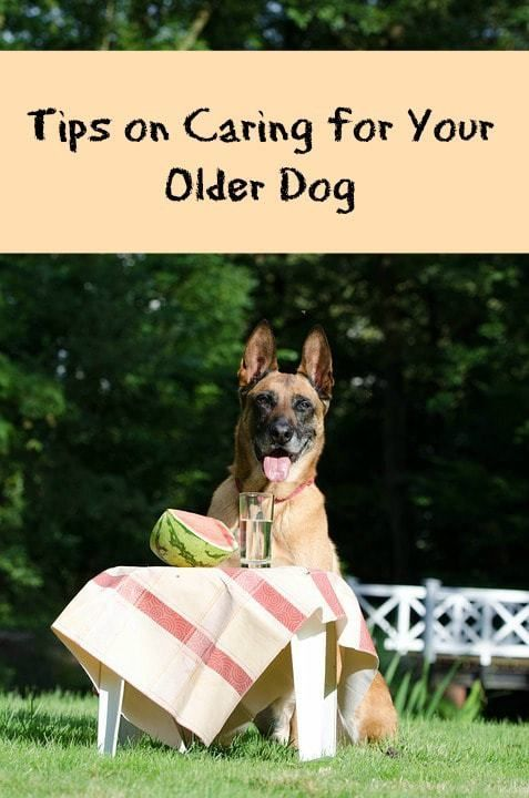 Care For Older Dog Paws Right Here In 2020 Elderly Dogs Elderly Dog Care Older Dogs