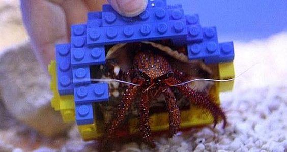 Cangrejo ermitaño con una concha hecha con bloques Lego.