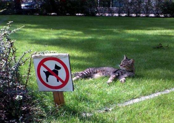 gazon pour chat