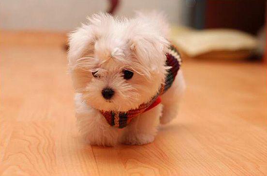 so tiny he coud be a stuffed animal