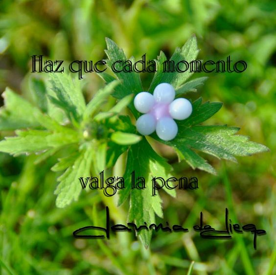 #frases #reflexiones #primavera #vidriofundido #flores #flowers