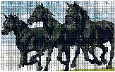 Cavalli Neri - Horses Blacks
