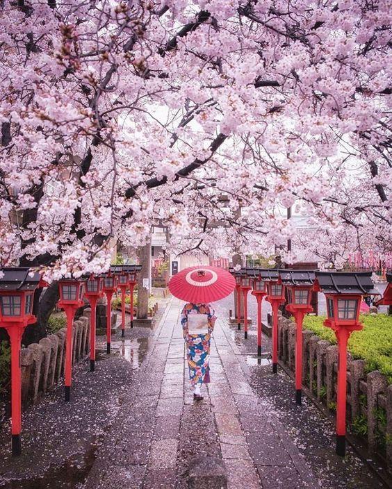Fotos do Japão • Coisas do Japão