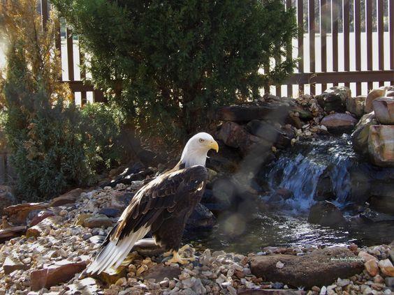 Eagle Aviary