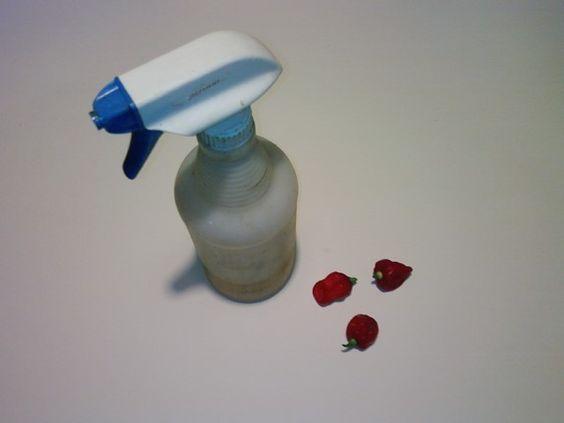 Homemade pepper spray repels pests