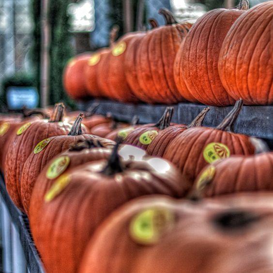 Pumpkins from the garden center