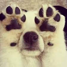 강아지 발은 이뻐요