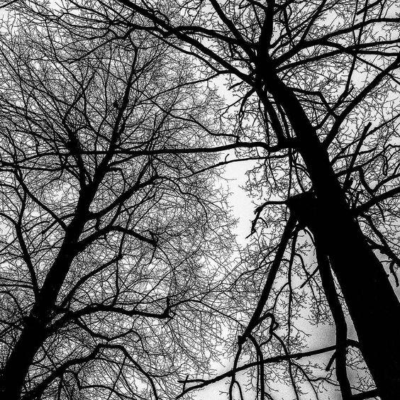 脉 #Shadowplay #blackandwhite #bnw #trees #veins by feiyou