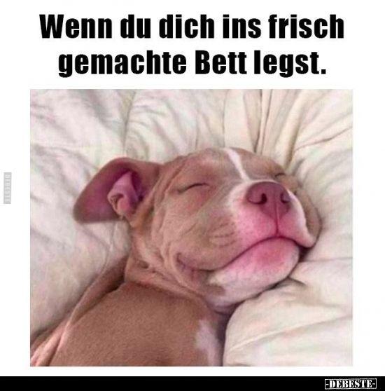 Wenn Du Dich Ins Frisch Gemachte Bett Legst In 2020 Pitbull Welpen Welpen Hunde Welpen