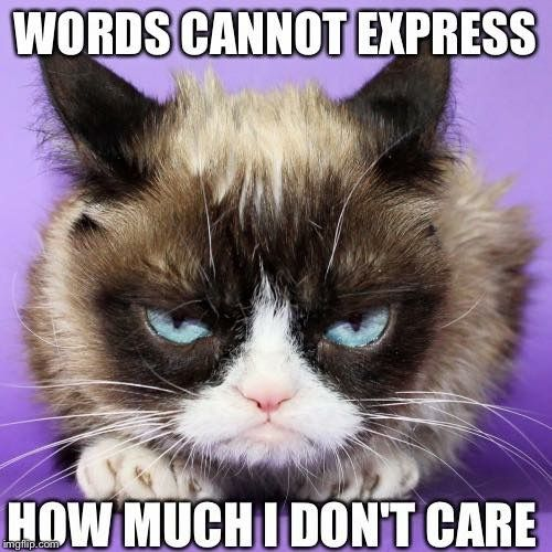 Words Cannot Express How Much I Don T Care Grumpy Cat Grumpy Cat Humor Grumpy Cat Quotes