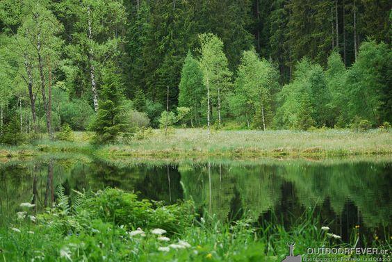 Die Naturgewalten Tour im Nationalpark Nordschwarzwald veranschaulicht eindrucksvoll die urgewaltige Kraft von Wind und Wasser.