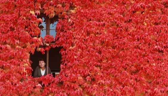 Em Ballenstedt, na Alemanha, uma casa coberta por folhas - Outubro - 2013
