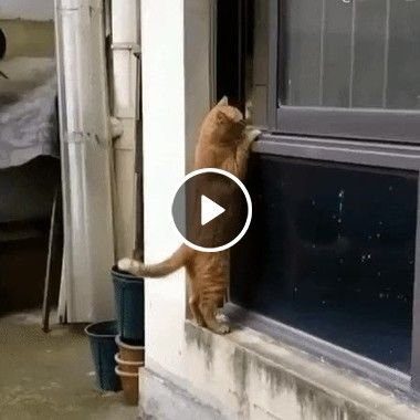 Gatinho está querendo conhecer alguém melhor