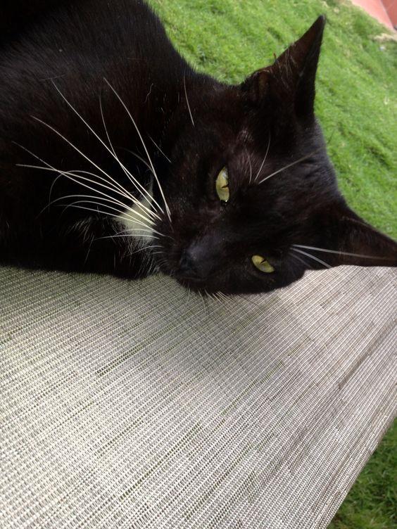 Cat pal in Panama...