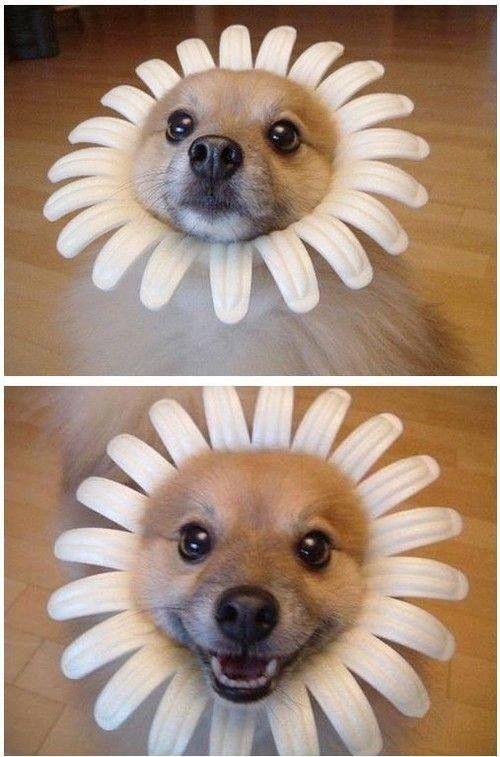 Image result for site: pinterest.com happy dog