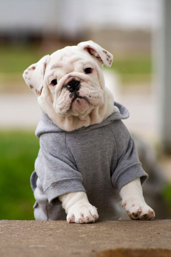 I want him! Would make a good pall for Lola :)