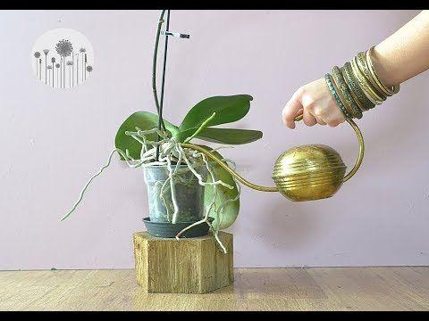 Jak Podlewac Nawadniac Moczyc Storczyka Youtube Plant Hanger Healthy Plants Macrame Plant Hanger