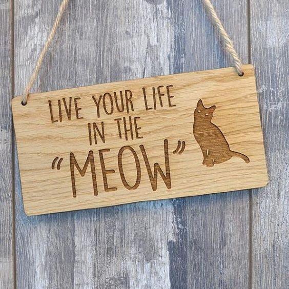 """Live your life in the 'meow'."" Don't worry about the future or the past - concentrate on the present, and everything will be just fine. // cat quotes to live by"