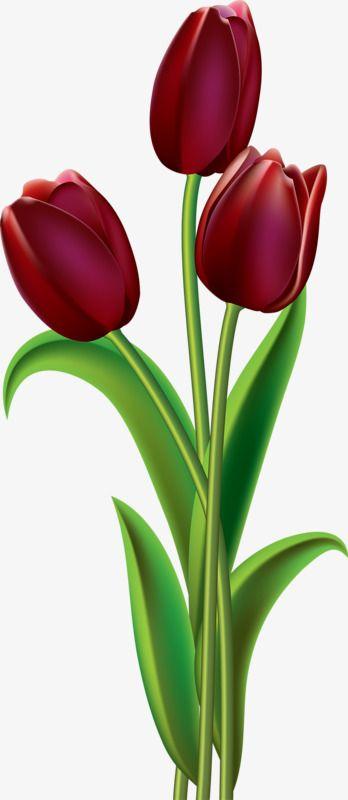 Tulipanes Rojos Flores Pintadas Imagenes De Tulipanes Pintura De Tulipan