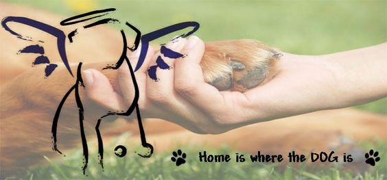 http://opinionthatcounts.com/wp-content/uploads/2014/06/dog-love-750x350.jpg