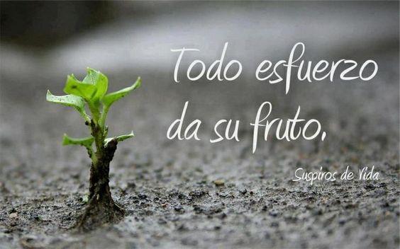 No abandones tus sueños, sigue adelante con tus estudios que el fruto de ese esfuerzo, es la mejor recompensa para tener una vida mejor.