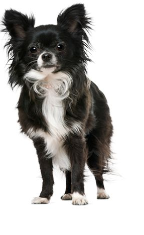 Dog Breed Questionnaire....Animal Planet's online questionnaire to help you select the best breed for your lifestyle.