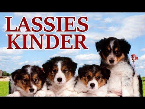 Lassies Kinder Kinderfilm In Voller Lange Ganzer Film Auf Deutsch Youtube Kinder Filme Filme Deutsch Filme Fur Kinder
