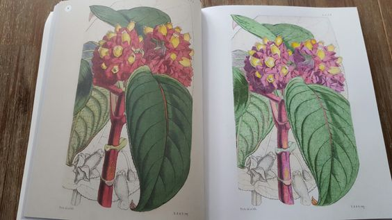 Kew Garden Colouring Book
