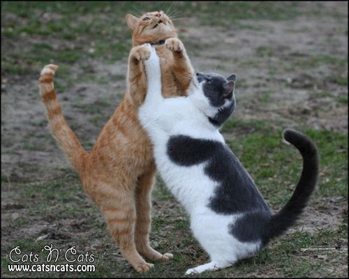 Cats playing around #Funny #Cats #LOLcats