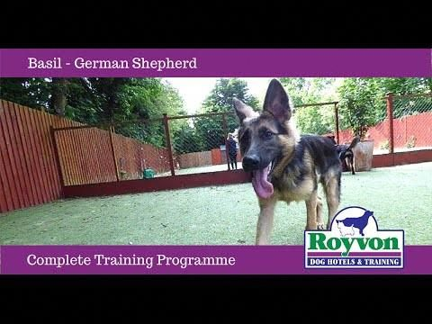 Pin On Dog Training Tips Jumping